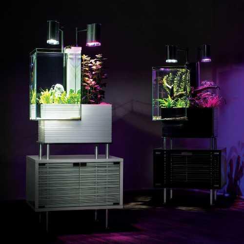 Aquaponics with Fish Tank