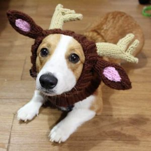 Reindeer Costume for Dog
