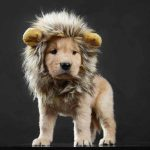 Lion Costume for Cat