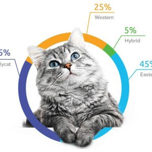 Cat DNA Test Kit