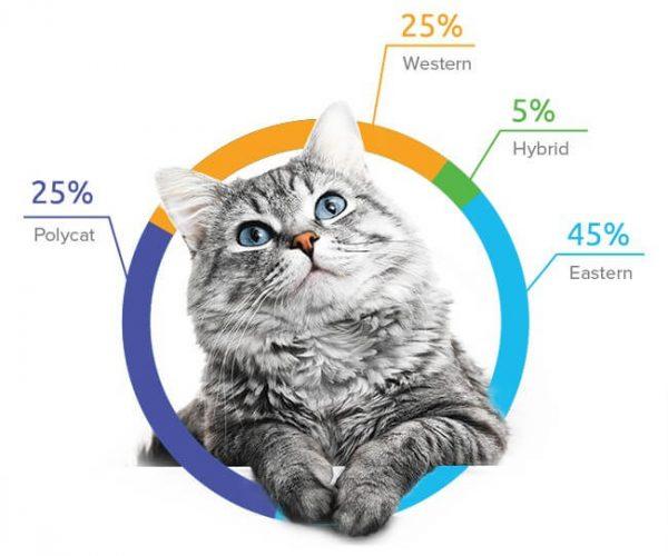 Cat DNA Test Kit