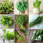 Best Vegetable seeds