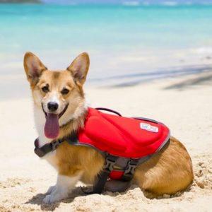 Best Dog Life Jacket